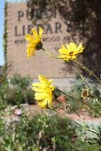 FormLA2010_Library_Blooms_YellowDaisyLikeCAGarden